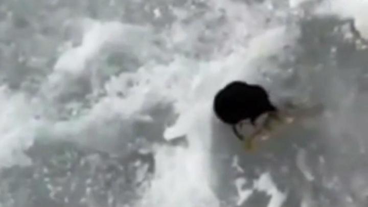 Дерзкая выхухоль: в Башкирии рыбаки засняли на камеру редкого зверька из Красной книги