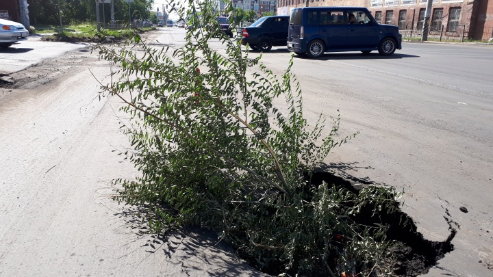 На улице 10 лет Октября образовалась огромная яма — в неё поместился куст