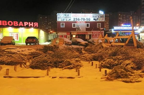 """Десятки елок оказались нераспроданными<i class=""""_"""">. </i>И так везде по городу"""