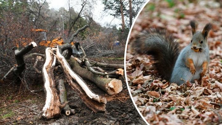 Белки все сбежали: фоторепортаж из Зеленой Рощи, где вырубают сотни деревьев