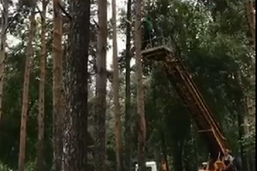 Работы в парке «Зелёная Роща»