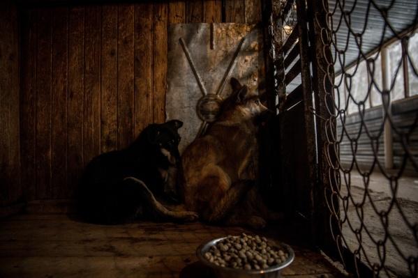 Зоозащитники подозревали, что мужчина незаконно торговал собачьим жиром