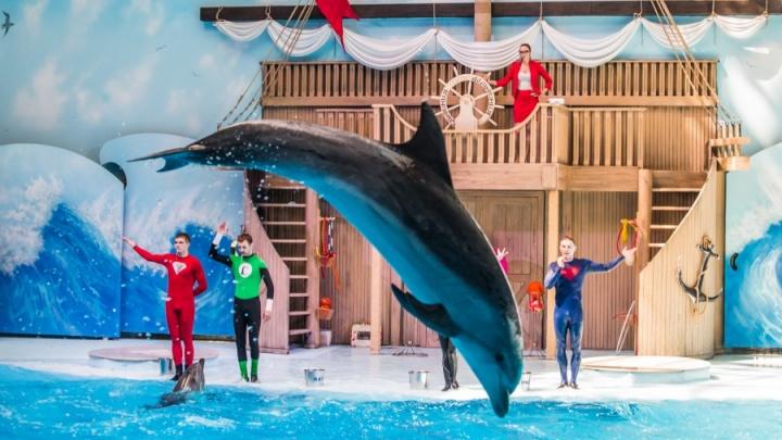 Дельфин под шампанское: в новосибирском дельфинарии решили проводить новогодние корпоративы