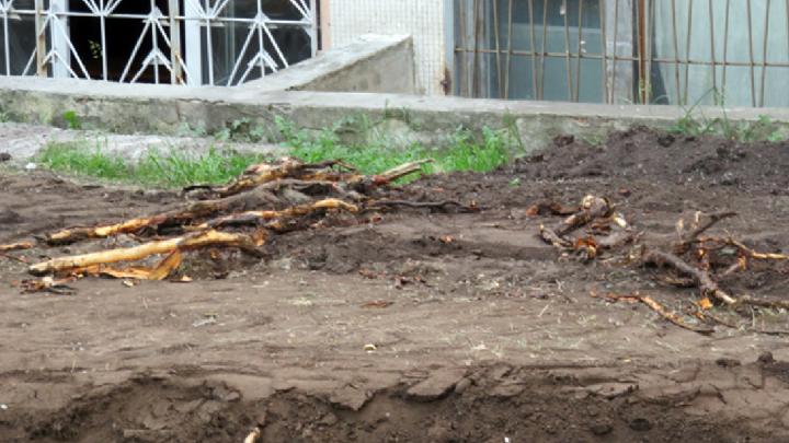 Теряем корни: челябинцев возмутило строительство проезда между общежитием ЮУрГУ и «Полётом»