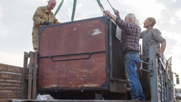 «Кушает лучше нас»: брошенный цирком медведь вместе со своим хозяином переехал на юг Волгограда