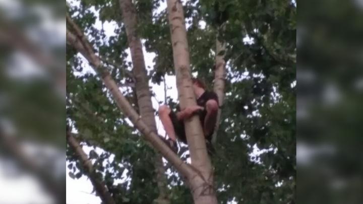 Ярославские спасатели снимали с дерева подростка: что он там делал