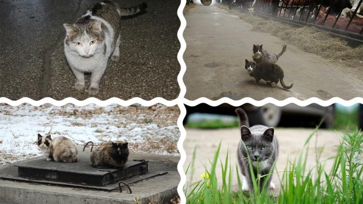 Четвероногий вахтёр и кошачья версия Ромео и Джульетты: фотоподборка в честь Всемирного дня кошек