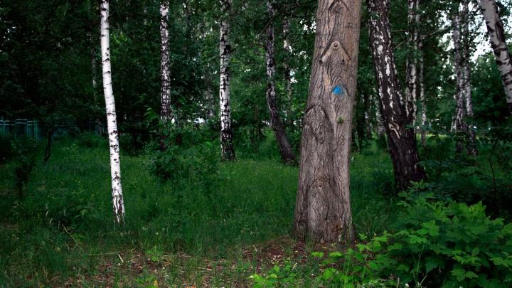 В лесу под Новосибирском до поздней ночи искали заблудившегося грибника