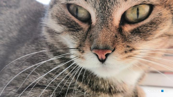 Пушистые и симпатичные: любуемся домашними животными, живущими у красноярцев