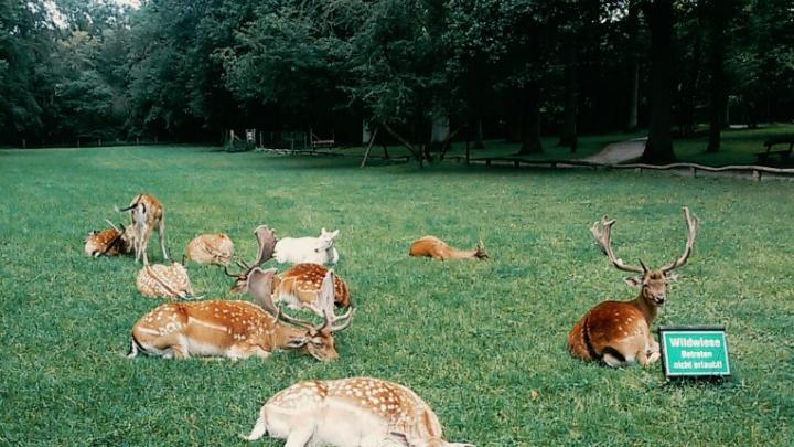 Донским охотникам разрешили убить шесть сотен оленей и косуль