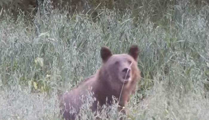Семья медведей из Башкирии впервые пришла на фотосессию
