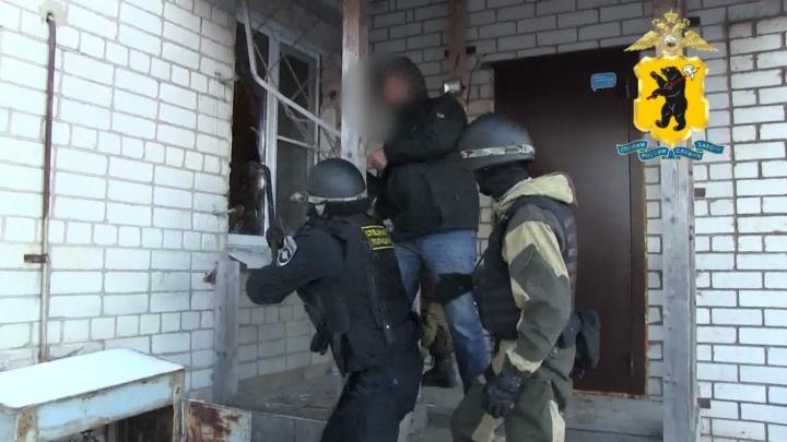 Выращивали коноплю в промышленных масштабах: в Ярославской области задержали наркокартель