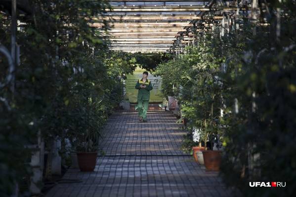 На территории хотят построить оранжерею, зоопарк, садово-парковый комплекс и зимний сад