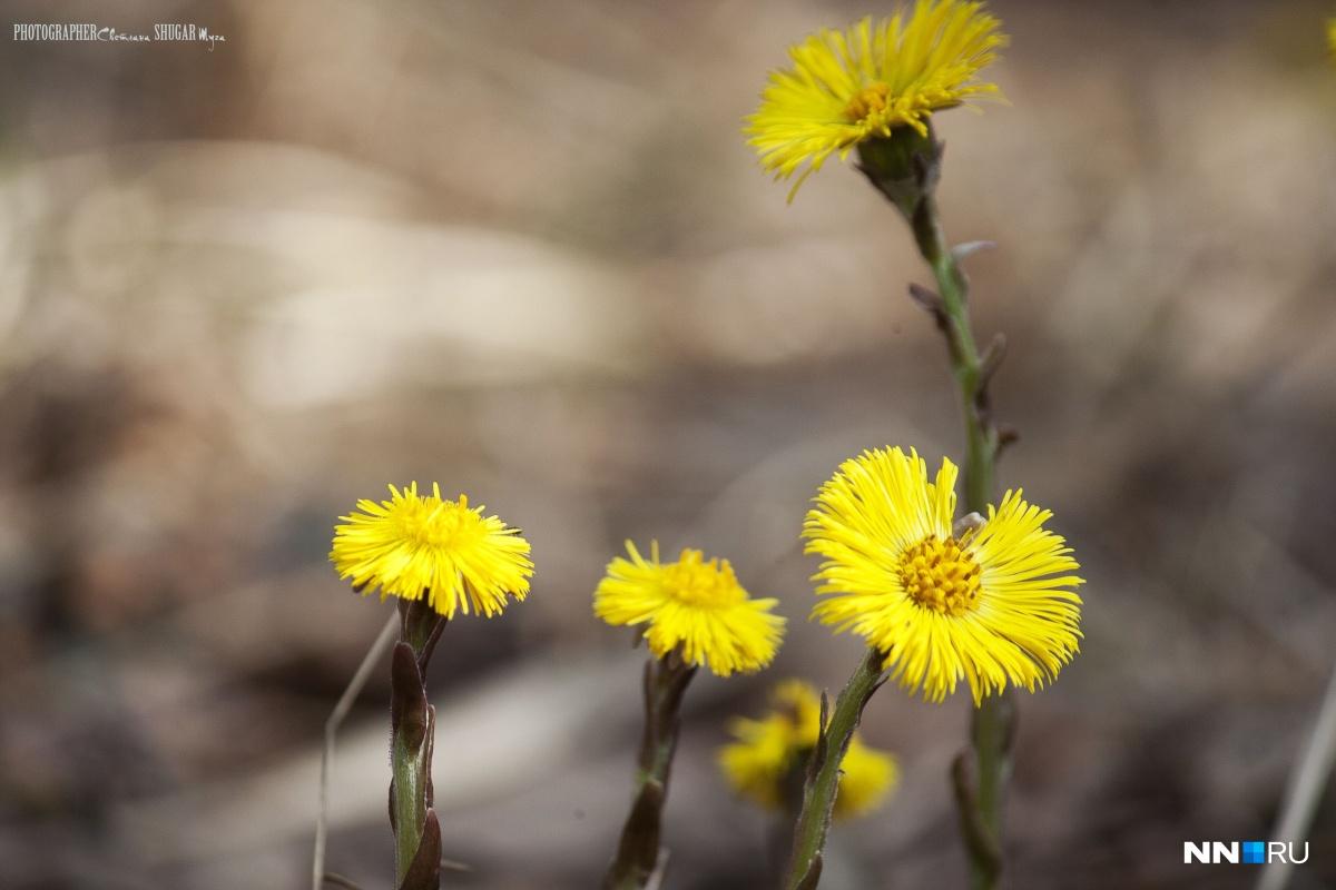 С такой погодой расцвет природы пойдёт семимильными шагами