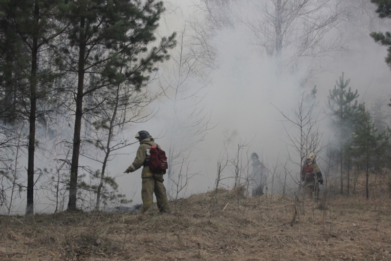 Лесные пожары бушуют в соседнем Кургане