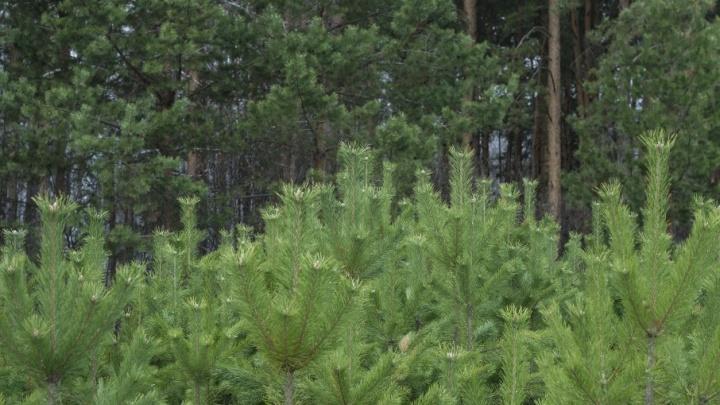 «Лес не тронут»: власти опровергли слухи о стройке президентского городка в парке Гагарина