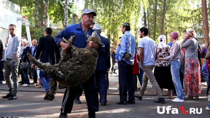 В Уфе появится Курбан-центр для совершения обряда жертвоприношения