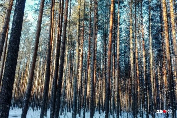 За вырубку леса глава Почезерского получил три года условно