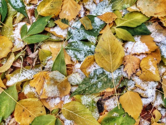 Октябрь будет относительно тёплым, но периодически будет идти и снег