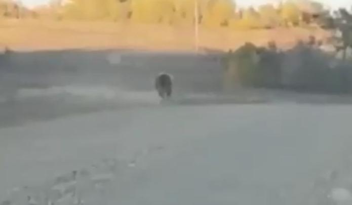 В Башкирии возле заправки встретили медведя — момент попал на видео