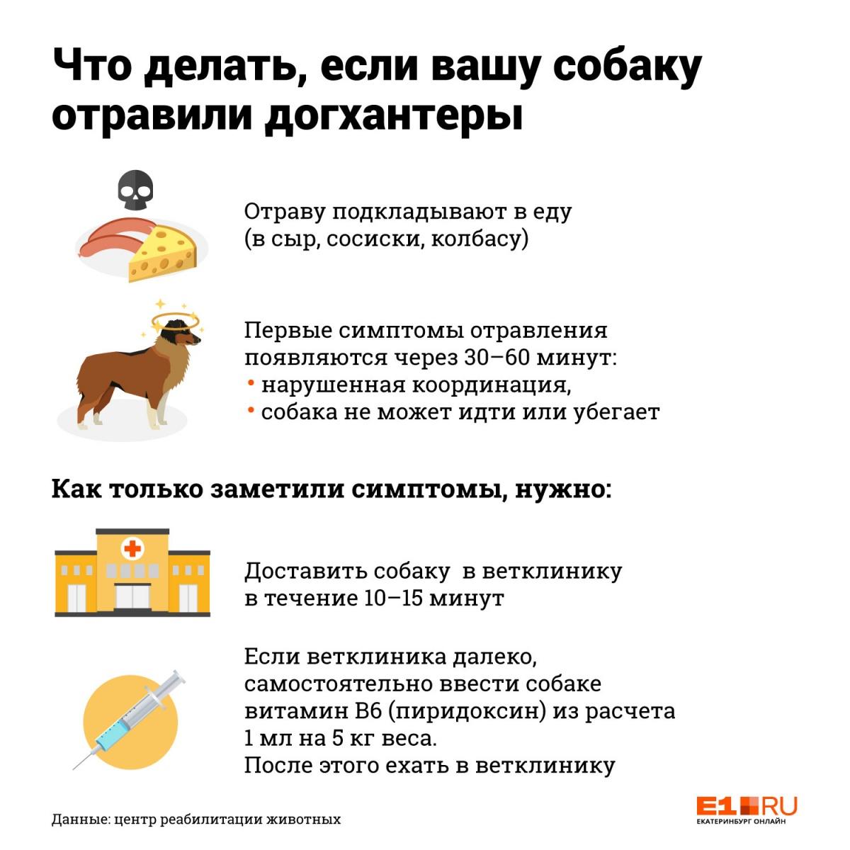 Инструкция E1.RU: что делать, если вашу собаку отравили догхантеры
