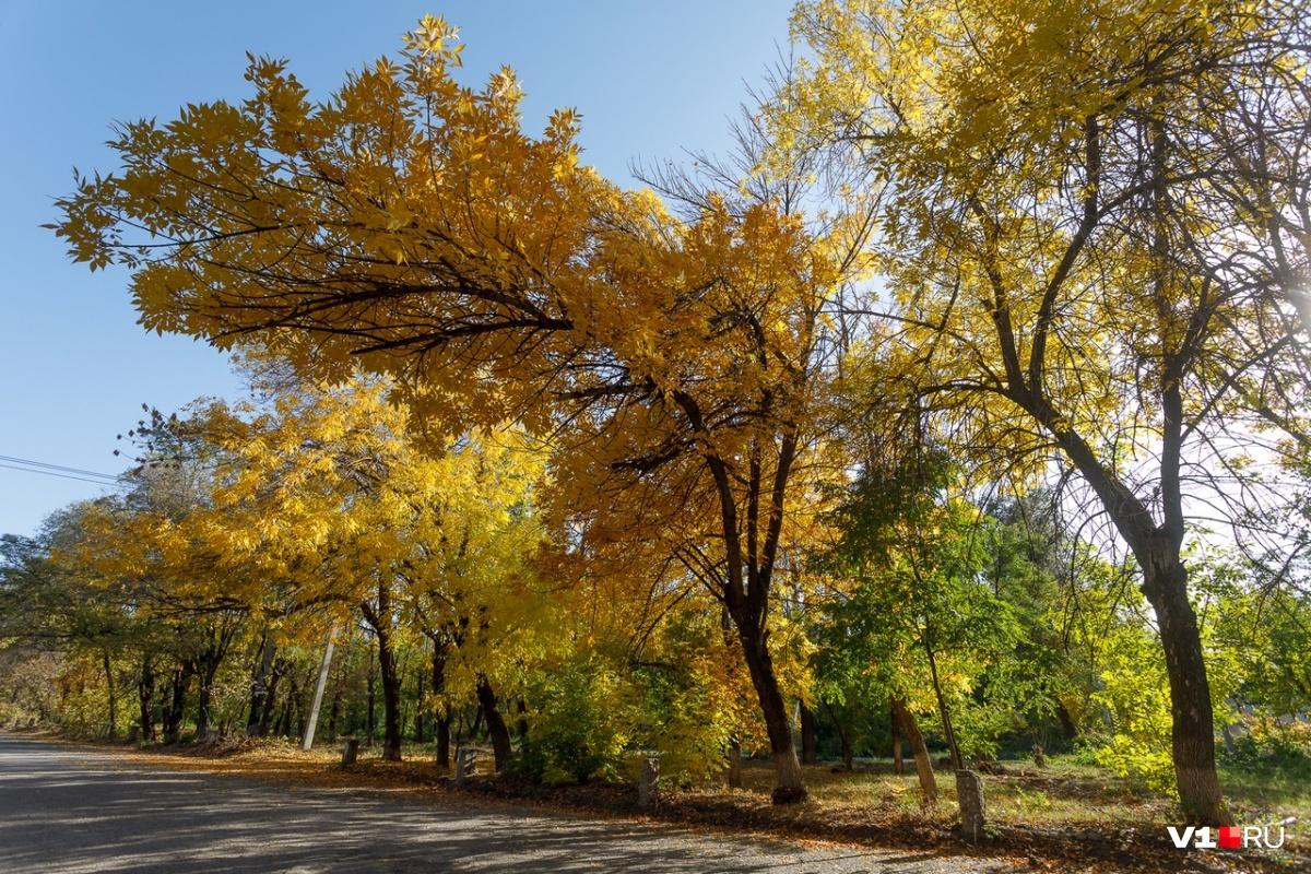 « В октябре до обеда осень, а после обеда зима» — осень приближается к экватору
