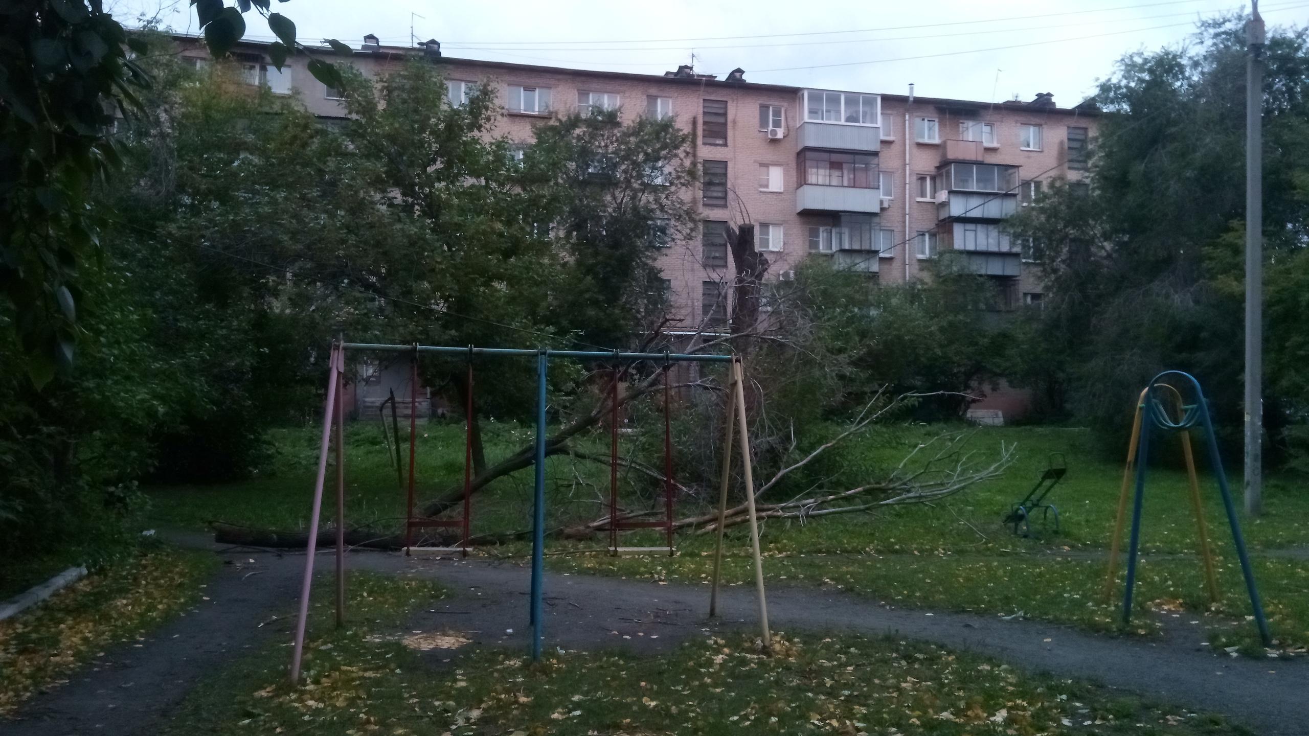 А во дворе на Свободы, 157 дерево упало на детскую площадку и зацепилось за провода столба освещения