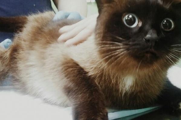 После лечения коту хотели найти новых хозяев