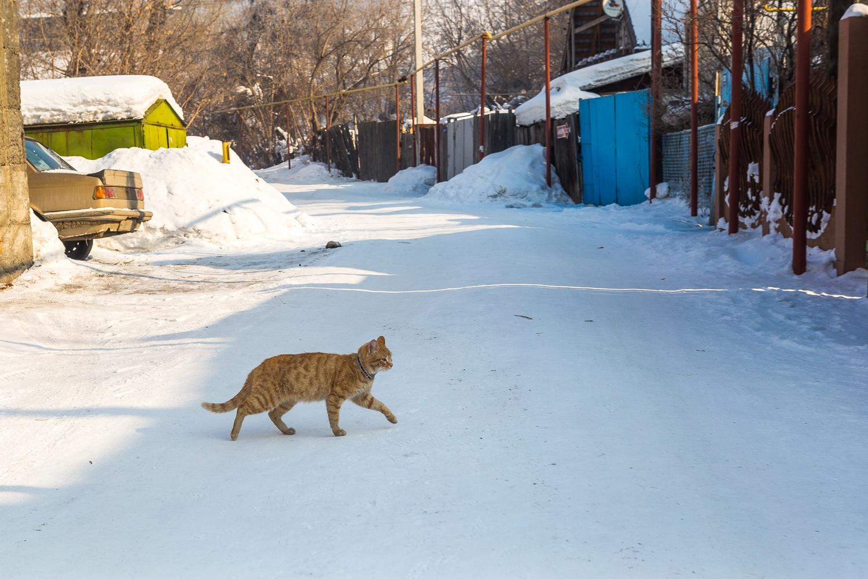 По микрорайону бегают стаи бродячих собак и гордо вышагивают явно домашние котики