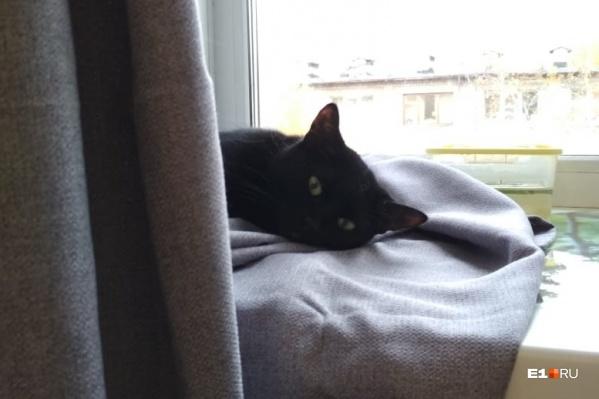 Эта кошка живет в доме на Сулимова, где до сих пор холодно. По словам хозяйки, она очень грустит
