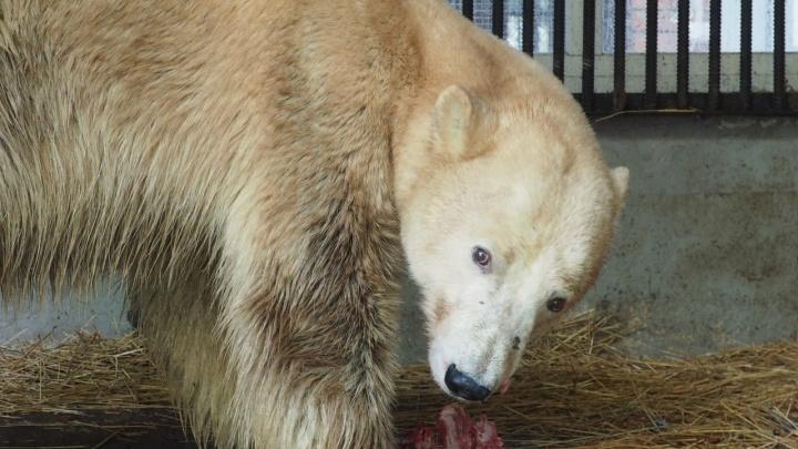 «Всё идет медленно»: смотрим, как дела у медведицы из Норильска