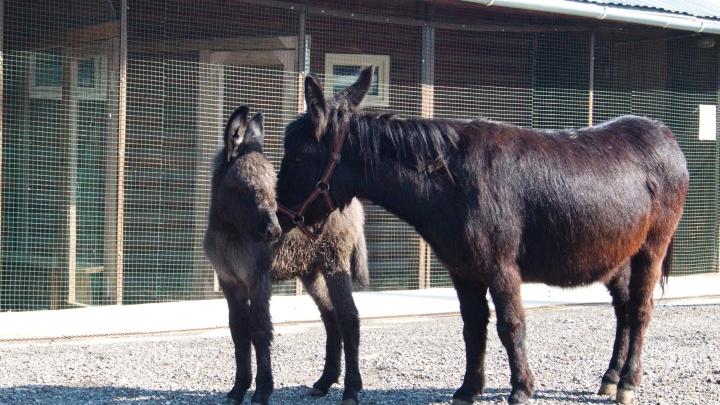 Горожане дали пони и ослику в Самарском зоопарке имена героев Диснея