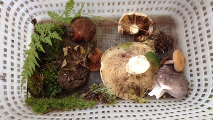 Уфимские спасатели нашли в лесу заблудившегося грибника