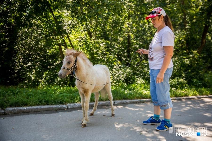 Вцентре Красноярска вновь разрешат прокат лошадей
