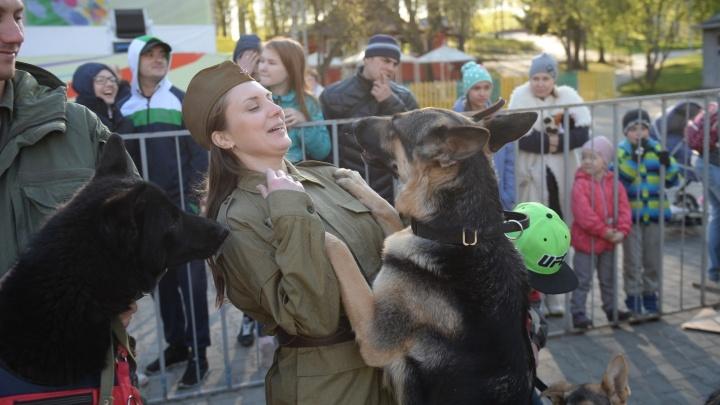 """""""Зрители плакали"""": в ЦПКиО горожанам показали военную реконструкцию с участием собак"""