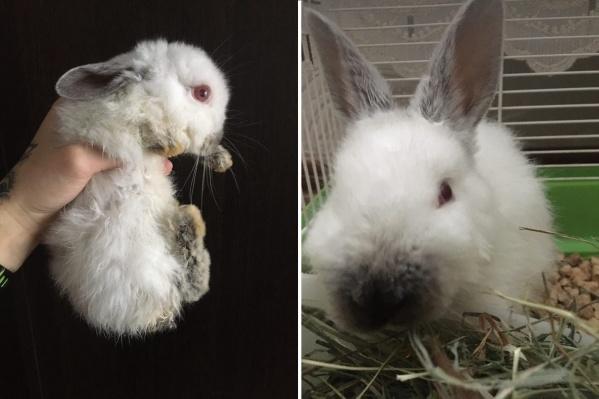 Маленького кролика выбросили запертым в железной клетке