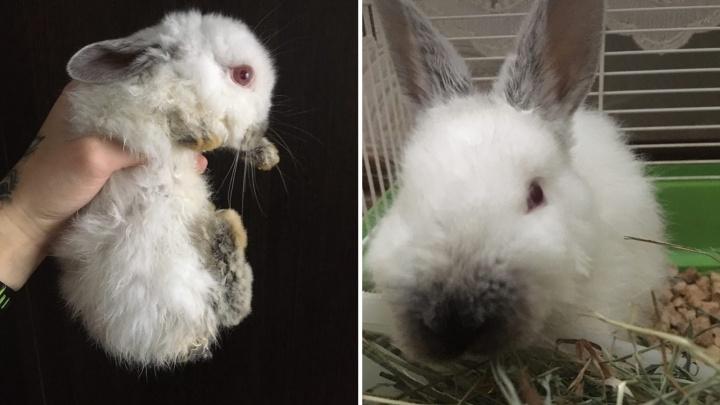«Примёрз к железной клетке лапками»: в Новосибирске выставили на мороз трёхмесячного крольчонка