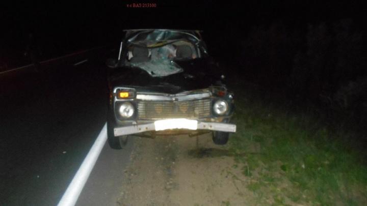 Лось выскочил внезапно: в ДТП в Ярославской области пострадал ребёнок