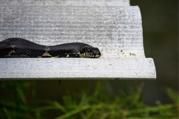 Первые случаи укуса змей появились в мае