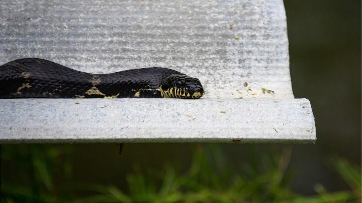 Сезон начался: двух екатеринбуржцев укусили змеи