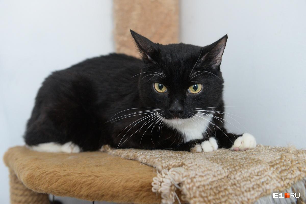 Котик уже год живет в центре реабилитации животных