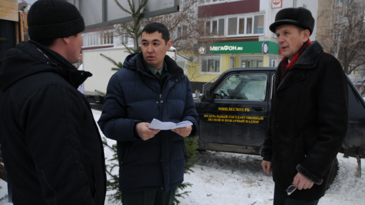 В Башкирии незаконно вырубили ёлок на 3,4 миллиона рублей