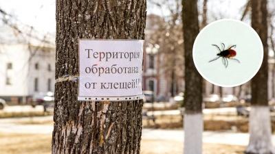 Теплая зима изменила природу: энтомологи рассказали об активности клещей и комаров летом-2020