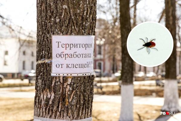 Клещей могло стать меньше из-за потопа, а комаров — из-за отсутствия снега зимой