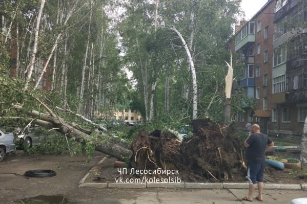 Мощные деревья выкорчевало с корнями