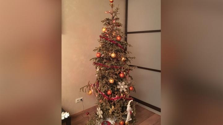 «Выбросить рука не поднимается»: новогодняя ёлка простояла в квартире у новосибирцевпочти год