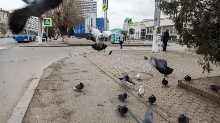 Звенящая тишина и новогоднее похмелье: Волгоград начал год с пустыми дорогами и закрытыми магазинами
