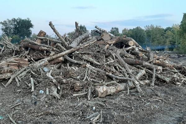 На массовый снос деревьев пожаловались местные жители