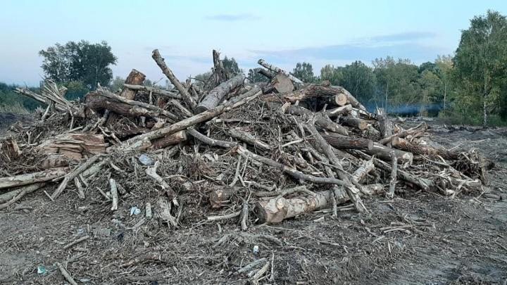 Угли есть, вырубки нет: в мэрии опровергли снос деревьев у городского пляжа