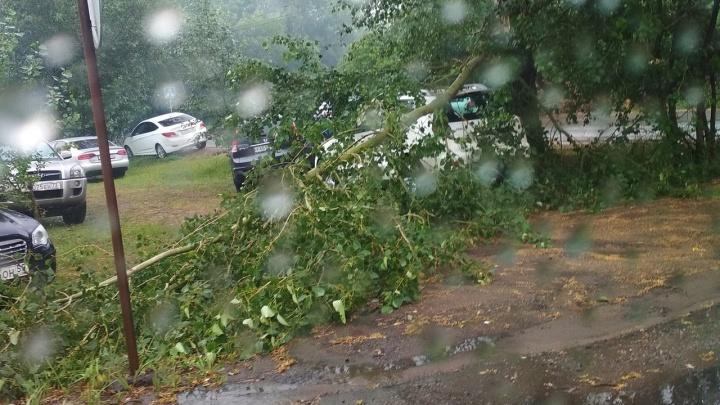 В Омске во время грозы затопило дороги и повалило деревья